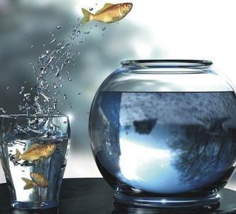 fishbowl-determination